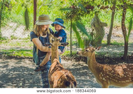 Mother And Son Feeding Beautiful Deer From Hands In A Tropical Zoo