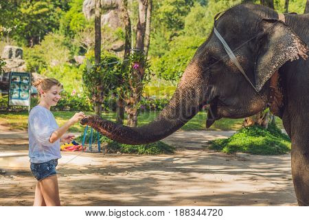 Woman Feed The Elephant In The Tropics