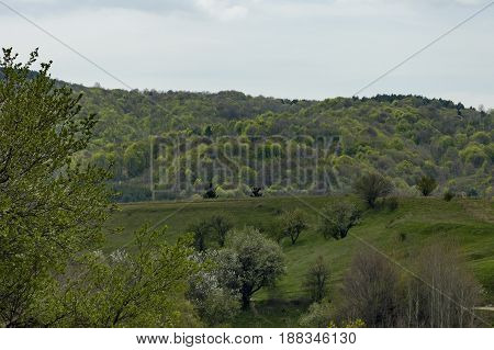 Beautiful landscape of spring nature with green glade, fragrant blossom  trees and forest,  Plana mountain, Bulgaria