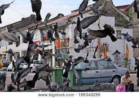 The group of pigeons in the City of Georgetown, Malaysia