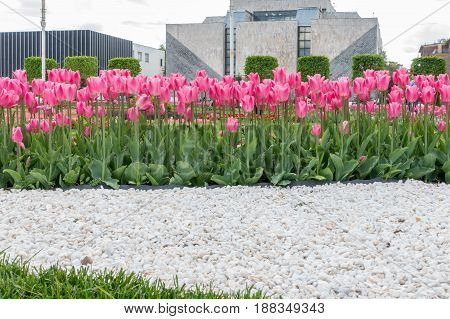 Tulips On Vdnkh