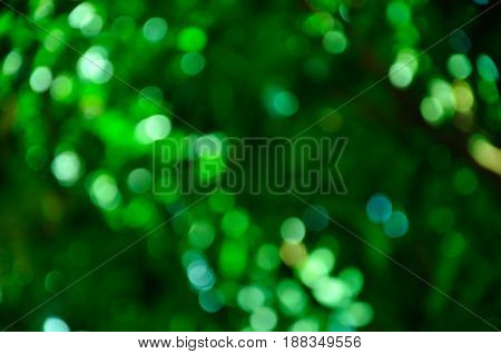 Texture of the green bokeh at tree.