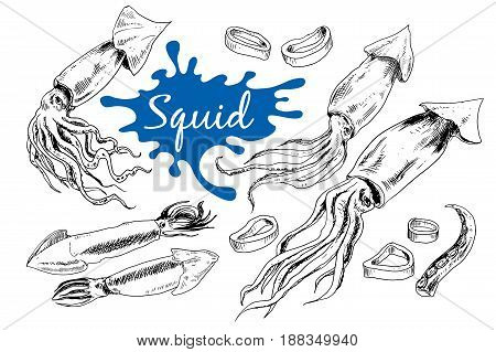 Hand drawn engraved icons. of squids Delicious food menu objects. Use for restaurant, promotion, market store banner