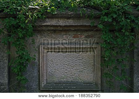 The photo shows an old tombstone embedded in a brick wall. He is deprived of transcription, is nameless. It is made of sandstone, has a rough surface. Surrounded by a sandstone frame. Around the table grow ivy clinging to the wall.