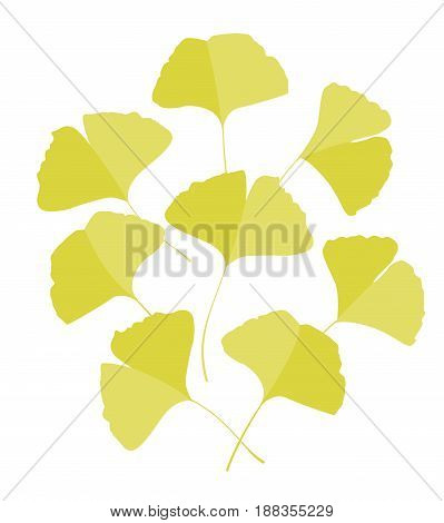 Vector Illustration ginkgo biloba leaves. Background with yellow leaves