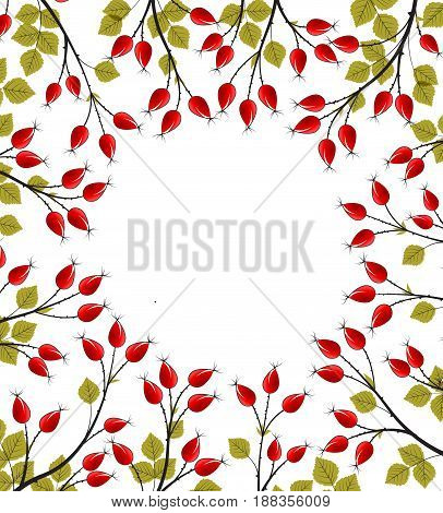 Vector Illustration of rose hip branches on a white background