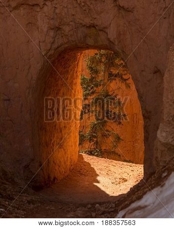 Tree Through Hoodoo Tunnel