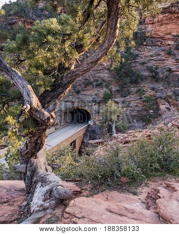 Twisted Tree And Zion-mount Carmel Tunnel