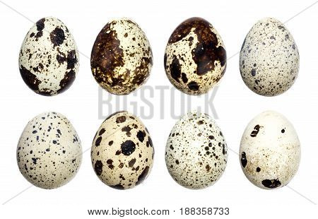 Isolated quail eggs. Big collection of quail eggs isolated on a white background with clipping path