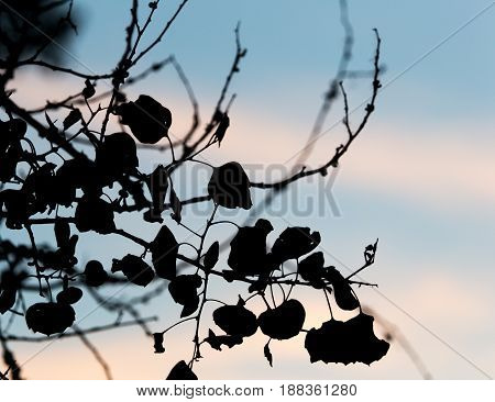 Abstract silhouette of tree branches on a background of dawn.