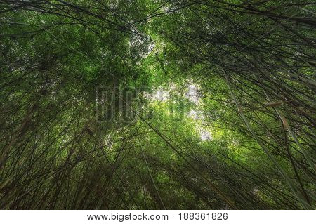 Pattern of vintage bamboo panel close up photo