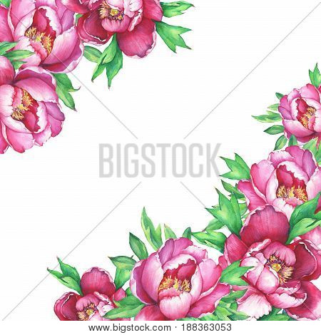Banner with flowering pink peonies, isolated on white background. Watercolor hand drawn painting illustration.
