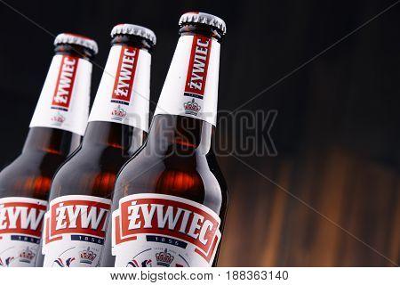Bottles Of Zywiec Beer