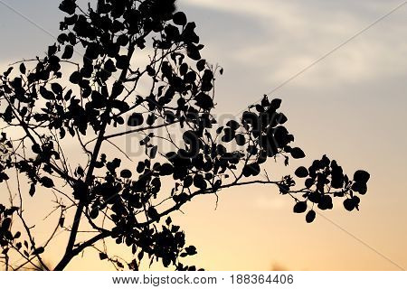 silhouette of tree branches on a background of dawn.