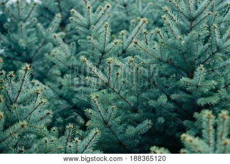 Nature And Environment, Christmas And New Year, Traditional Holiday Celebration