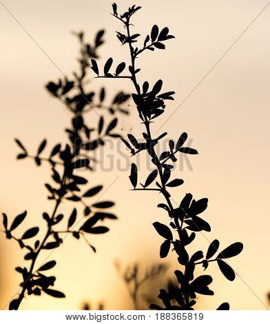silhouette of a tree branch on a background of dawn.