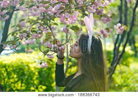 Cute girl or pretty woman with rosy bunny ears and long brunette hair smelling blossoming sakura flowers from tree in spring park on sunny day on blurred floral environment. Easter. Springtime
