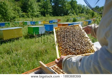 bees work on honeycomb. Honey cells pattern. Apiculture