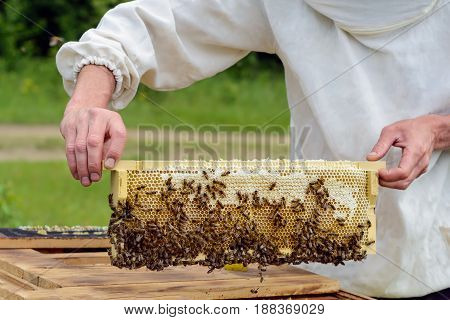 The beekeeper takes out from the hive honeycomb filled with fresh honey. Apiculture