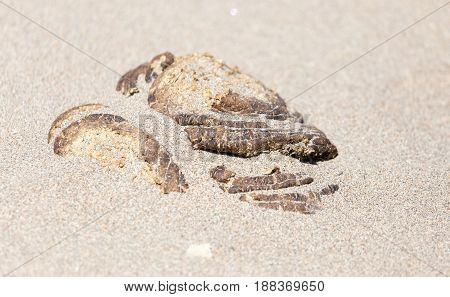 horse manure droppings in the white sand