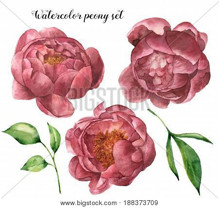 Watercolor peony set with leaves. Hand painted floral elements with flowers and greenery isolated on white background. Botanical illustration for design