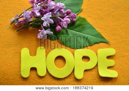 word hopoe on a abstract colorful background