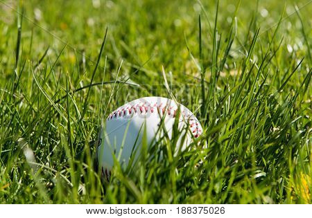 Baseball in green grass play, professional object