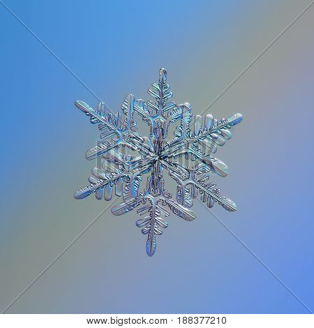 Real snowflake macro photo: small stellar dendrite snow crystal with six long, elegant arms and glossy relief surface. Snowflake glittering on smooth blue - gray gradient background in cold light.