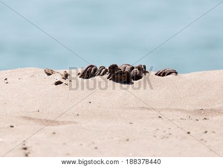 horse droppings in the sand . A photo