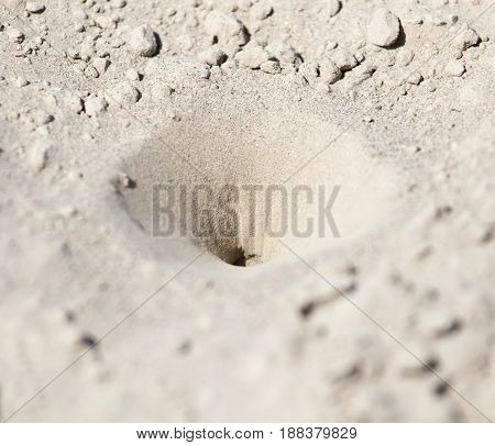 insect traps in the sand . A photo