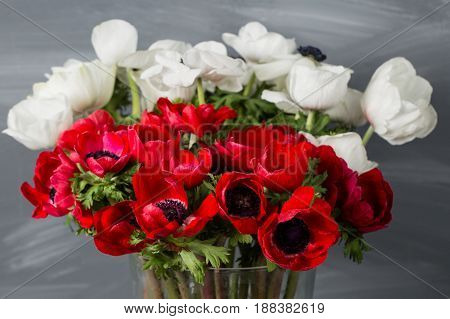 Close-up of a white and red poppies anemones in vase. Many flowers - gray background. winter flower.