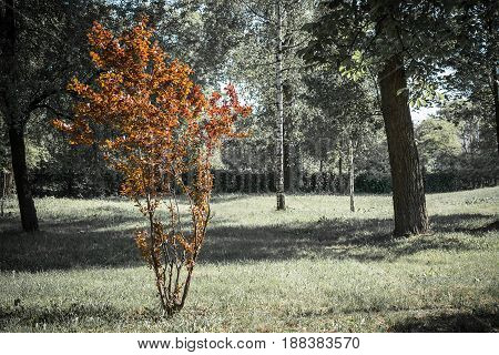 Natural Background. Tree With Brown Leaves In A Green Park. Horizontal Frame