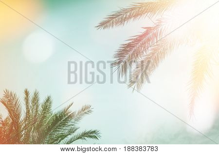 Palm trees against blue sky at tropical coast. Holiday travel background with place for text. Journey destination concept. Vintage texture frame. Retro toned and film stylized. Copy space.