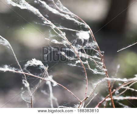web on the branches of a tree .