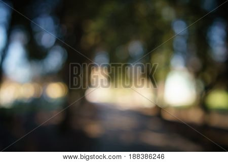abstract green park or garden blurred background in shadow path, real lens blur