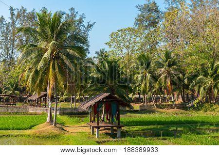 A Malaysian rice plantation in the morning sun