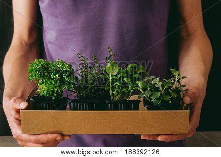 Fresh garden herbs. Gardener holding fresh herbs, closeup. With copy space.