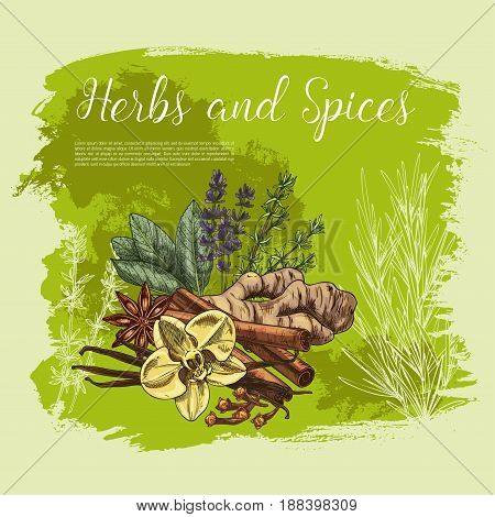 Herb and spice poster of fresh thyme, rosemary, anise star, cinnamon stick, ginger root, vanilla flower and pod, clove, sage leaf and lavender sketch. Organic farming, spice shop, healthy food design