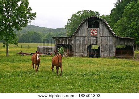 two horses in a pasture, a barn with a quilt square in the background