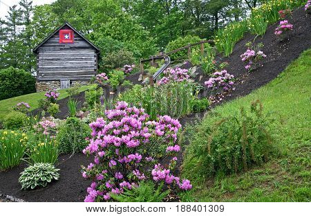 a garden of rhododendron, azalea and other plants and shrubs, a log cabin with a quilt square in the background