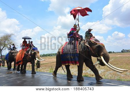 SURIN THAILAND MAY 9 2017 : Ordination Parade on Elephant's Back Festival is when elephants parade and carry novice monks on their backs. This event takes place at Wat Chang Sawang