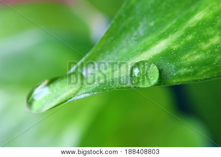 Crystal Clear Dewdrops on the Vibrant Green Leaf with Selective Focus