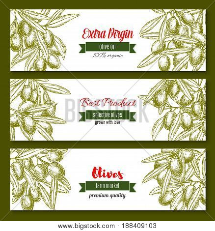 Olive oil banners. Vector design for extra virgin olive oil product or farm market of green and black olive fruits on branches. Set for natural cuisine and healthy cooking or labels