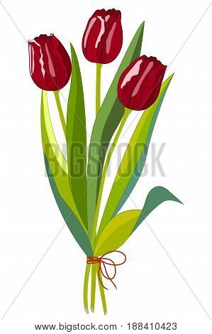Three red tulips with leaves, Isolated on white background, vector illustration