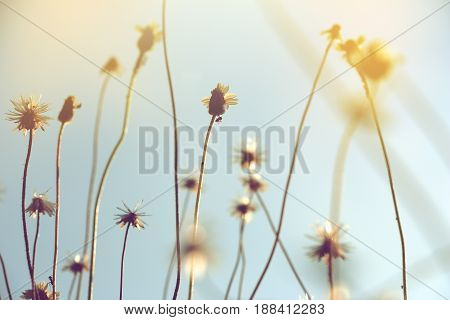 silhouette of wild grass flowers with soft focus of abstract nature background