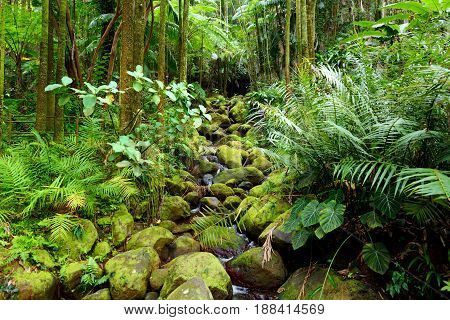Lush Tropical Vegetation Of The Hawaii Tropical Botanical Garden Of Big Island Of Hawaii