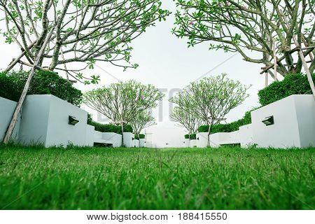 Modern garden, green grass lawn with tropical tree