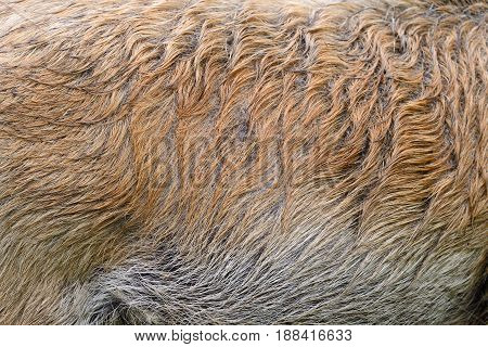 Texture Of A Skin Of A Wild Boar