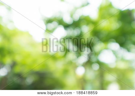Abstract bokeh blur tree nature background with sunlight on summer.