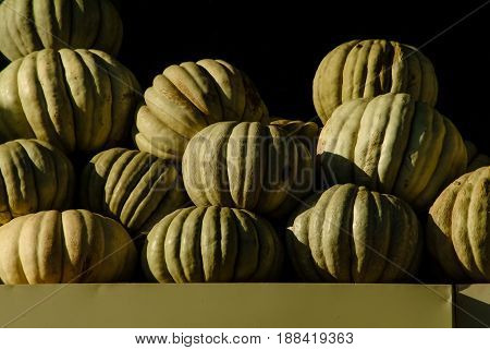 Harvested giant pumpkins awaiting for sale on the counter. Sunlight falling on the pumpkins.